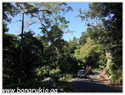 Pusuk monkey forest Lombok, Pusuk Lombok, Pusuk