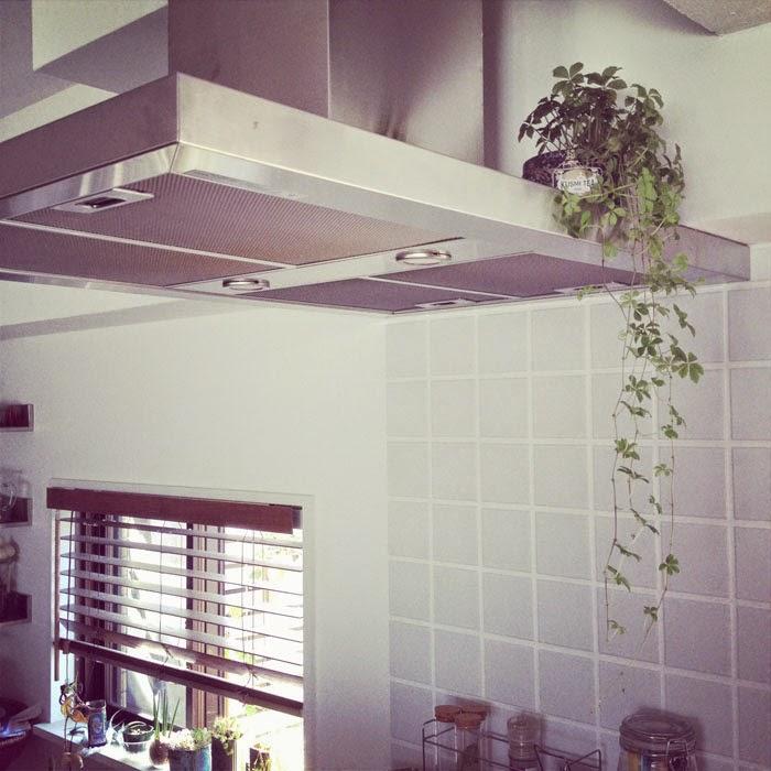 リノベーションマンションのキッチンのおしゃれな換気扇の上のグリーン植物