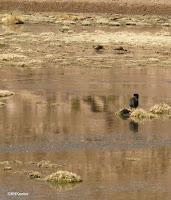 Atacama wetland