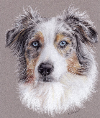 Australian Shepherd - Step by step