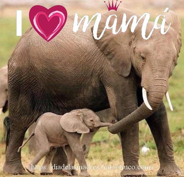 imagenes día de la madre animales