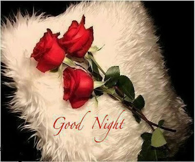 Good Night wise with Rose