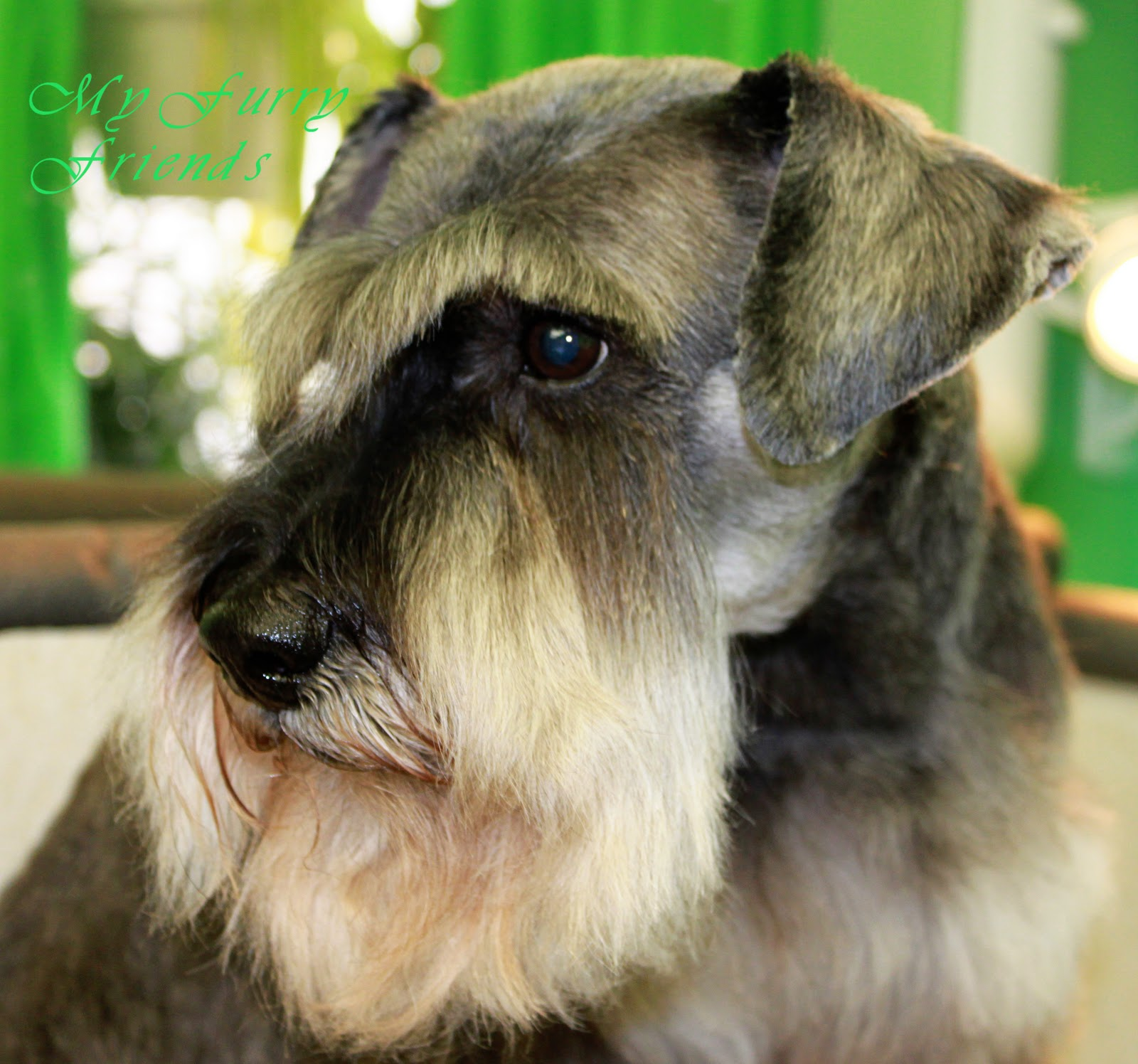 pet grooming: the good, the bad, & the furry: different looks of a
