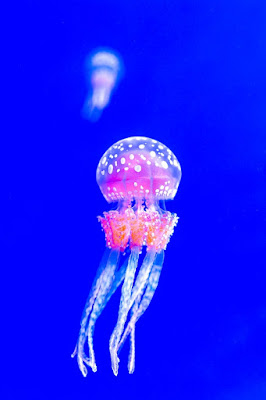 facts of jellyfish