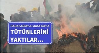 Tütün üreticileri protesto ederek Svilengrad-Pıstrogor yolunu kapattı