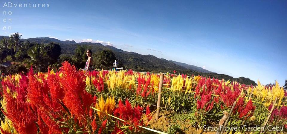 Sirao Flower Farm in Cebu