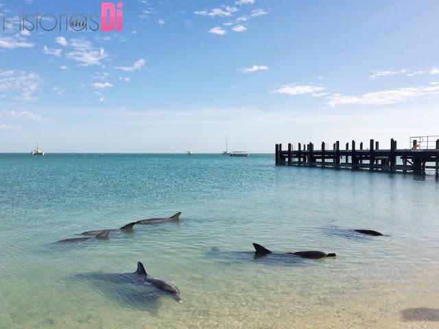 Golfinhos - Monkey Mia