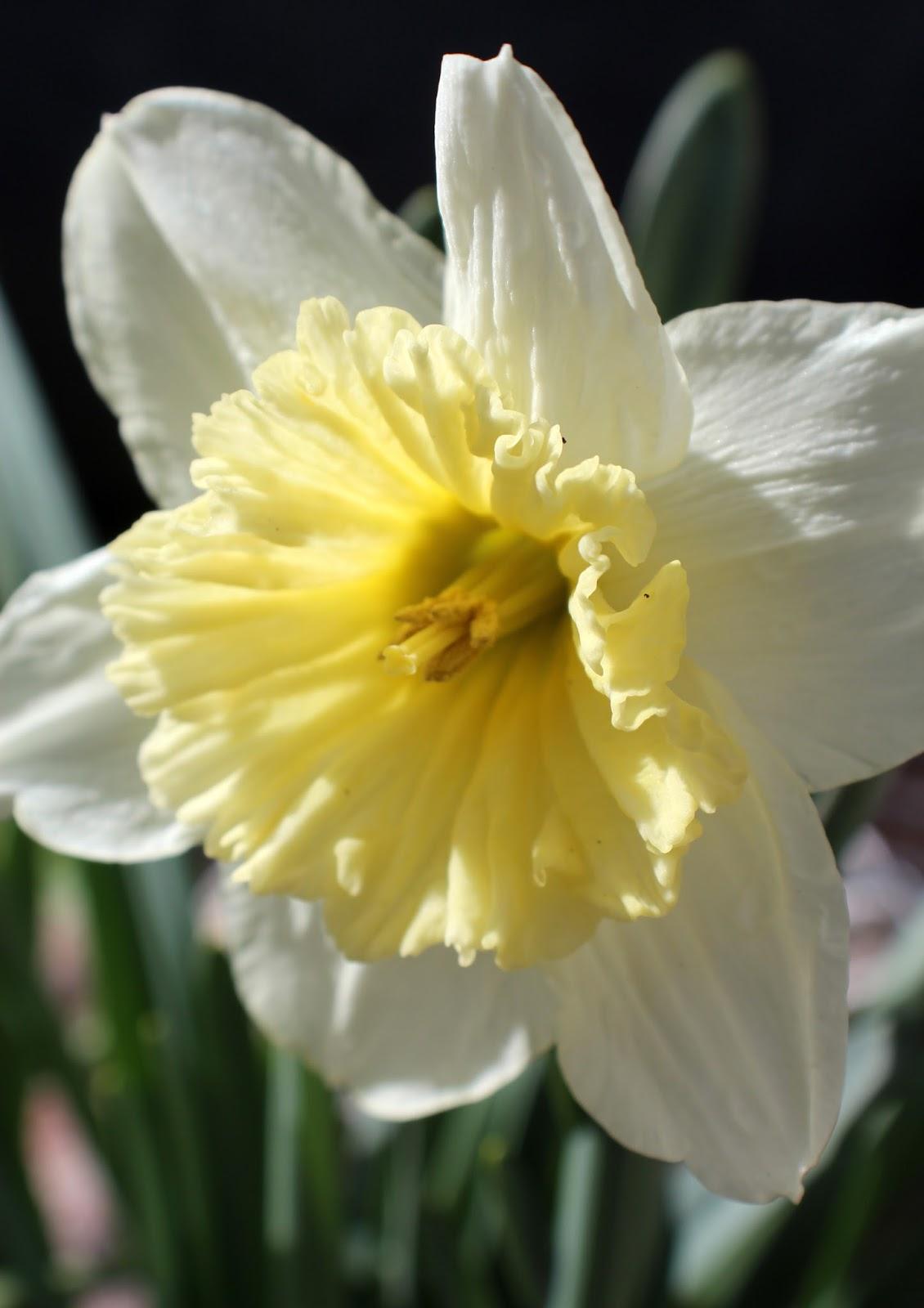 vit gul blomma