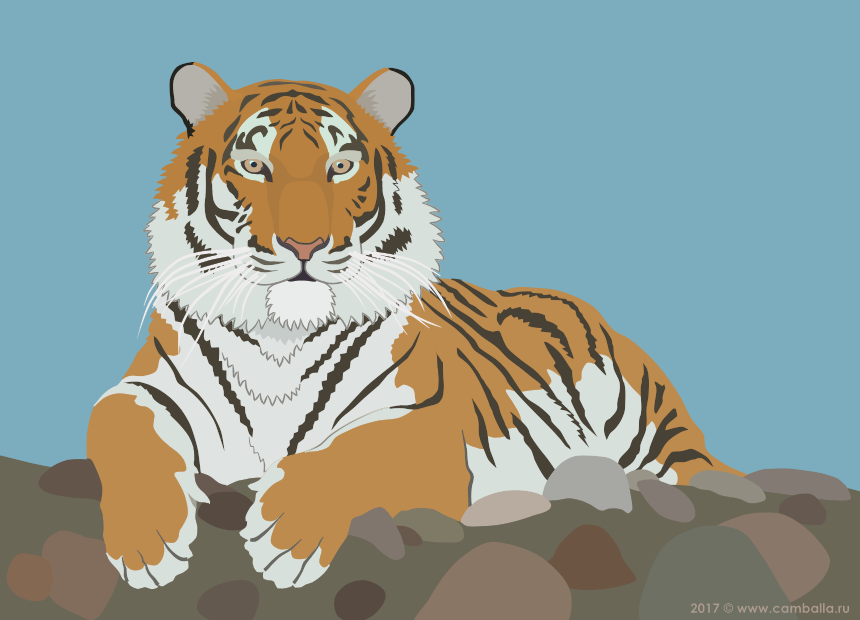Амурский тигр - большая картинка