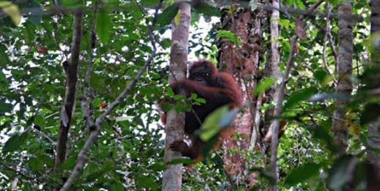 Pengertian Hutan Suaka Alam Beserta Ciri, Contoh, Manfaat, Fungsinya Terlengkap
