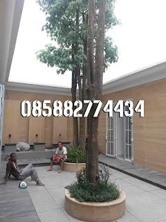 alt=pohon-pule-murah