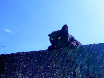 遊んで欲しそうに泣きながらガン見している猫