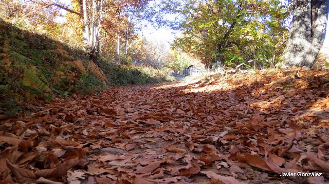 La Alberca. Salamanca. Castañares en otoño