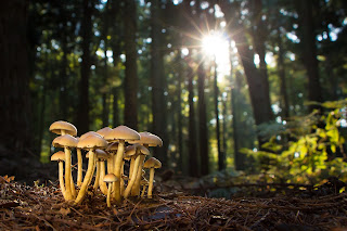Pengertian-Fungi-Ciri-Ciri-Struktur-Klasifikasi-Sifat-dan-Reproduksinya