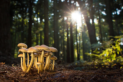 Pengertian Fungi Ciri-Ciri Struktur Klasifikasi Sifat dan Reproduksinya