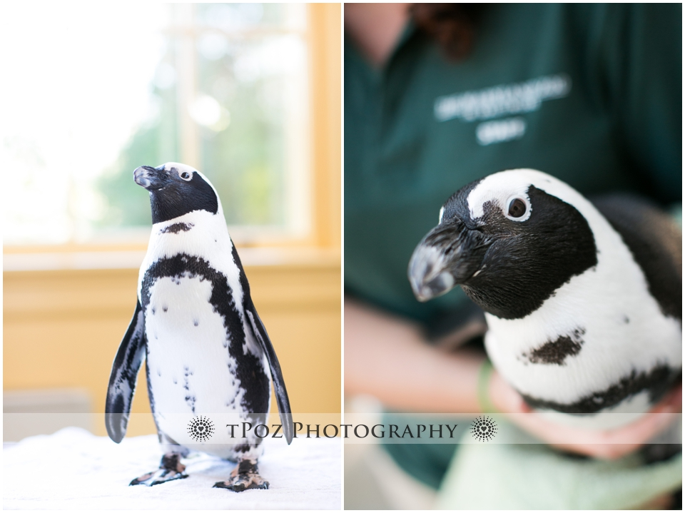 Wedding Reception Maryland Zoo Mansion House Baltimore Penguin