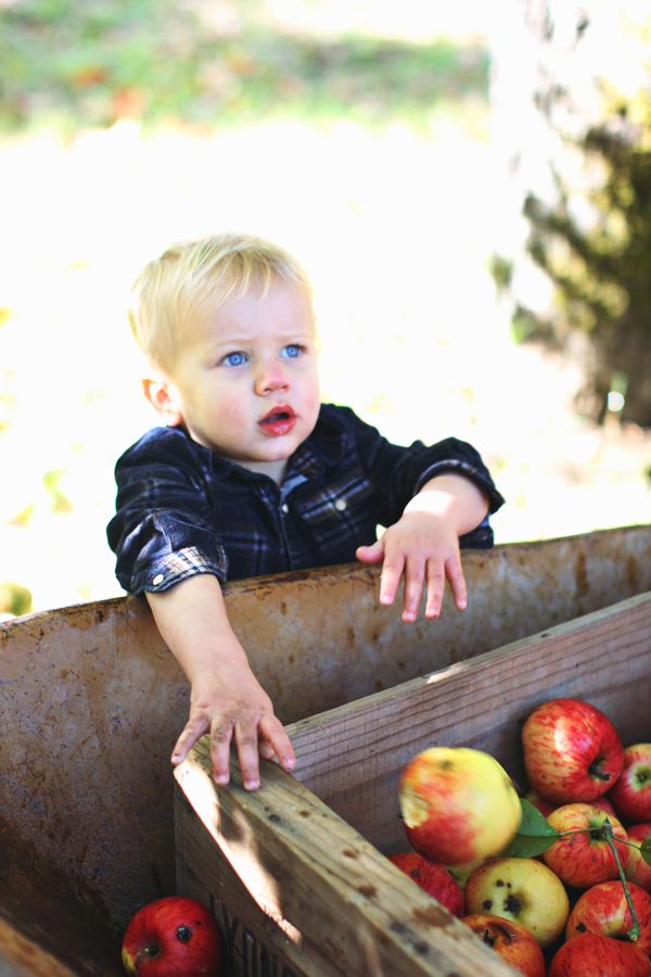 Family-friendly fall activities: apple picking!