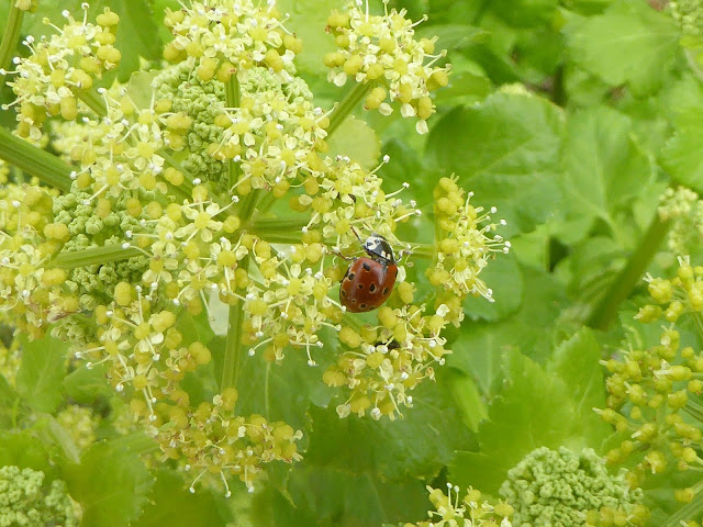 Ladybird Ladybird Go Away Home Crossword Clue Daily Mail