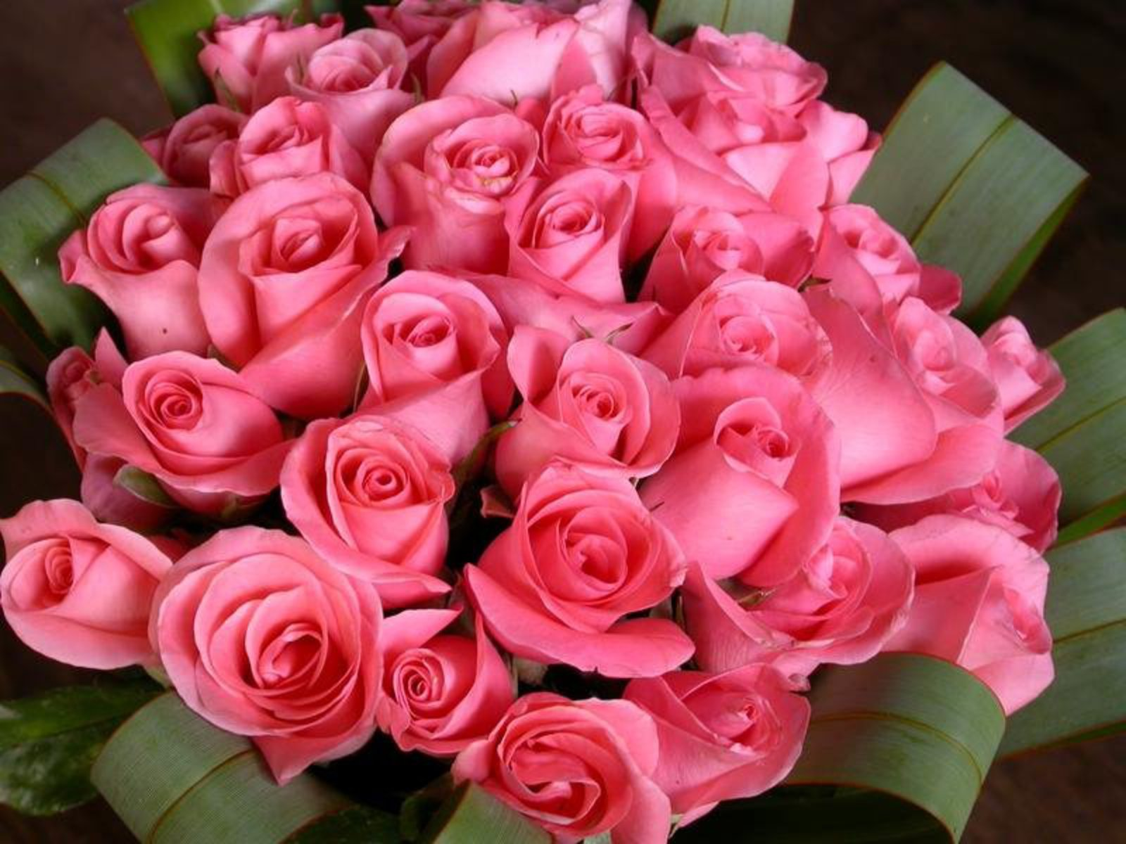 Flores De Aniversario: Wallpapers-Images-Pictures-Photos: Cute Roses