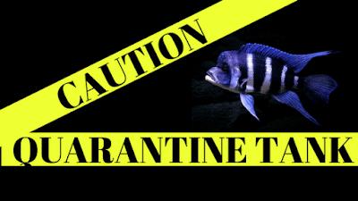 fish_healing_tank