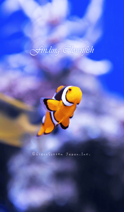 Finding Clownfish