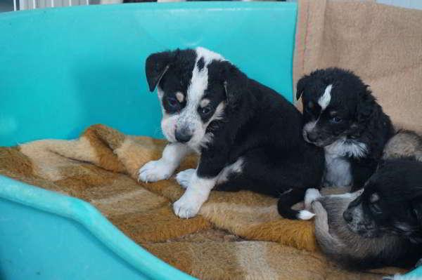 cachorros de tamaño mediano