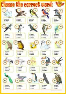 birds-around-us_wordsearchy-ESL-EFL-downloadable-printable-worksheets-practice-exercises-and-activities-to-teach-about-birds-picture-dictionaries