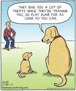 lots of treats play dumb, dog comic, puppy and dog comic, golden retriever funny, yellow lab funny, dog humor