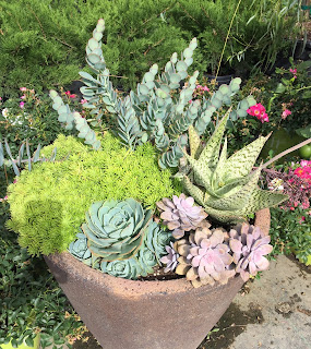 Succulent Pot, Vivero Growers Nursery Austin
