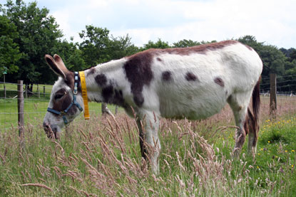 The Donkey Sanctuary partners with Cats Protection