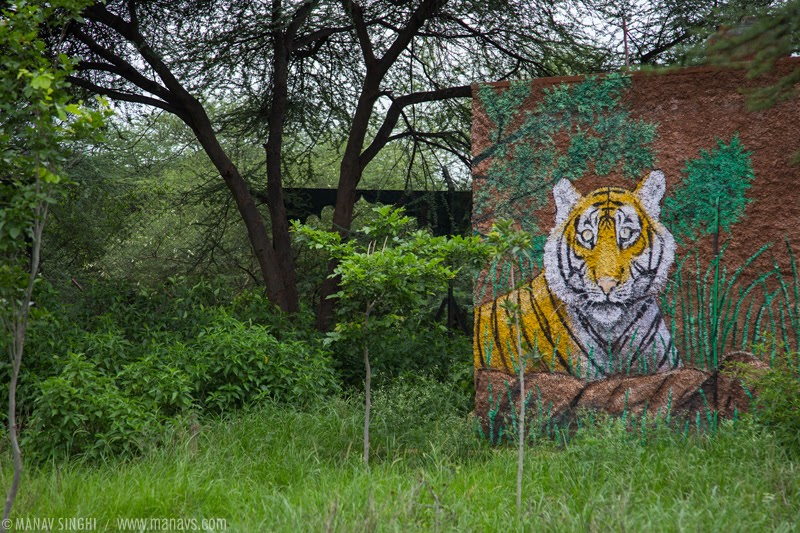 Tiger Painting Art at Nahargarh Biological Park, Jaipur, Rajasthan.
