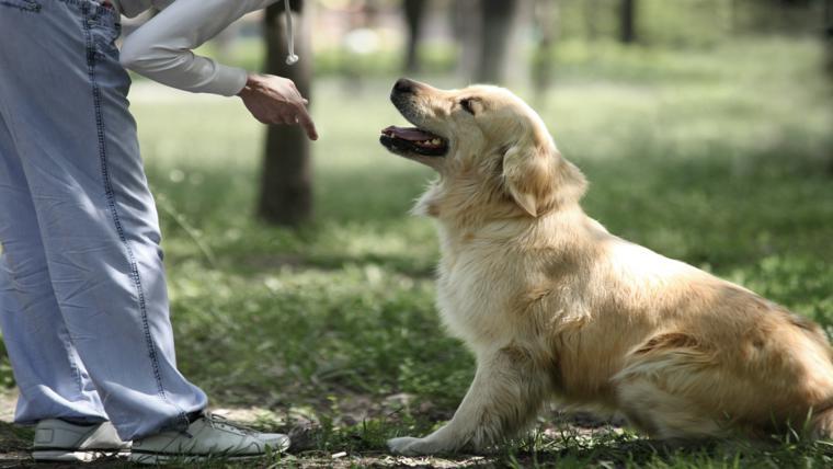 Curso gratuito de Adestramento de Cães