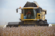 New Holland CX 780 Combine. Poppy & Opium