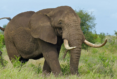(Video) Tahukah Anda? Najis Gajah Boleh Menghasilkan Kertas