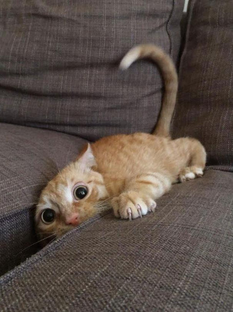 """Những tai nạn """"khó đỡ"""" của những chú mèo"""