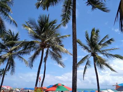 Fotografia colorida. Ao fundo, céu azul-claro com núvens brancas, realça vários coqueiros de tamanhos diversos, que ocupam toda a área da foto. Na margem inferior, um pequena faixa de mar esverdeado e as copas de várias sombrinhas coloridas.