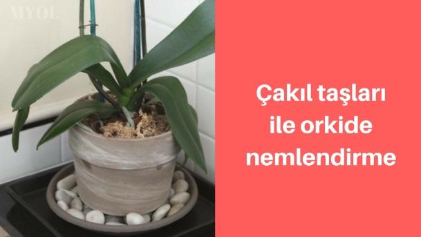 Çakıl taşı ile orkide nemlendirme tepsisi