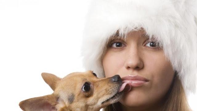 Να γιατί οι σκύλοι έχουν την συνήθεια να γλείφουν