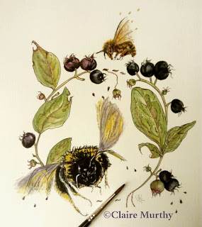 British wildlife watercolour bee and botanical watercolour workshops
