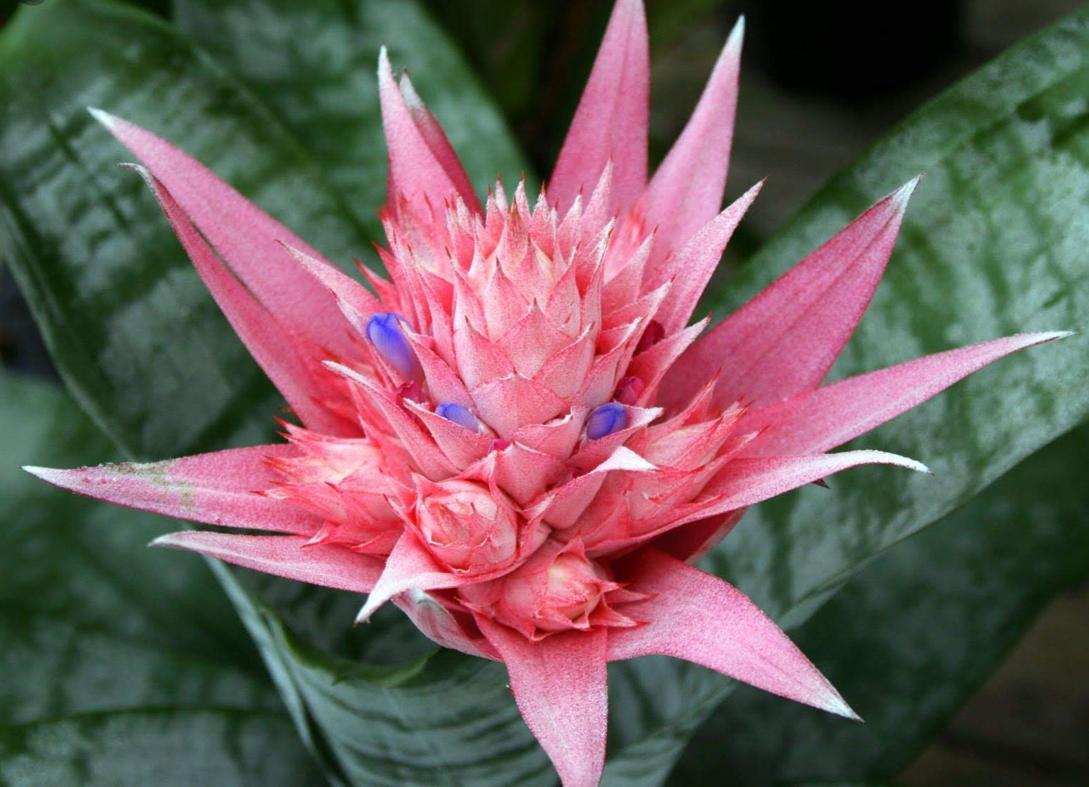 Longtime Collector Offers His Favorite Rare Plants At Show
