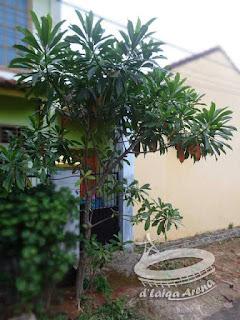 penampakan pohon