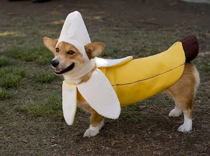 Spectacular Dog Costumes You Wish Your Pet Had ...