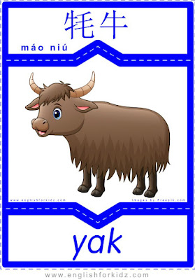 Yak - English-Chinese flashcards for wild animals topic