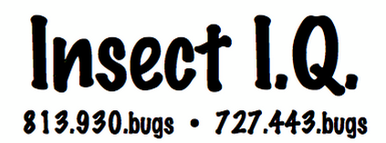 All Florida Recent Bee Removals Rodent Treatment In St