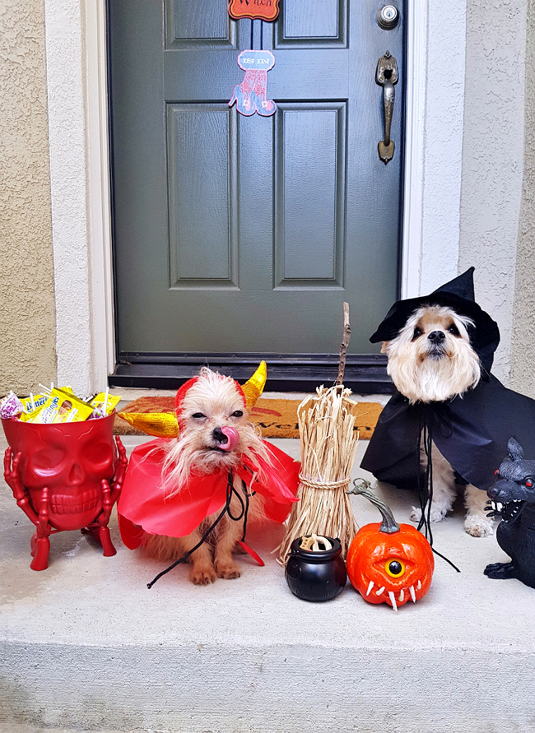 99 Cents Only Stores Have Pet Costume For $.99!- 5 Budget Friendly Pet Costume Ideas #DoThe99 #99Obessed #AD