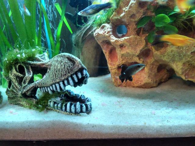 Aquário, Aquariofilia, peixes, aquarium, fishtank, fish, animal, animais de estimação, blogue de casal