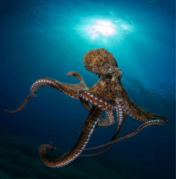 octopus photo 1