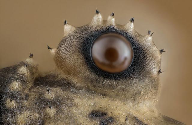 Mắt của con nhện chân dài (daddy longlegs) thường xuất hiện trong nhà, tác phẩm đến từ Washington, xếp thứ 12 chung cuộc