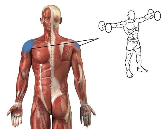 Top Best Shoulder Isometric Exercise For Stronger Shoulder - bodybuilding110