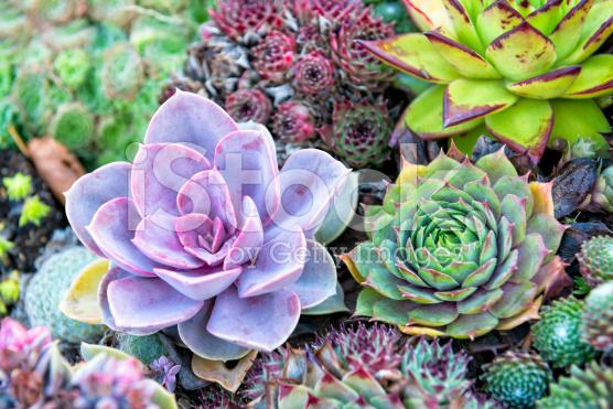 succulent full color di terrarium Jakarta Indonesia1
